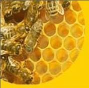 giornata dell'ape