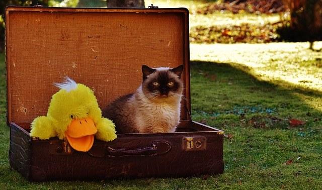 luggage1897231_640.jpg